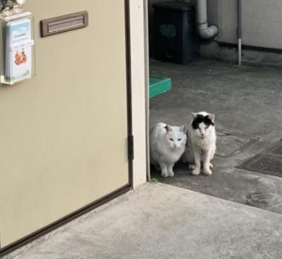 地域猫コロちゃんと子分