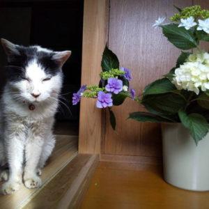 愛すべきトライドケアマネジメントのマスコット猫、コロちゃんが亡くなる
