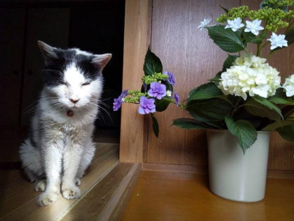 マスコット猫のコロちゃん